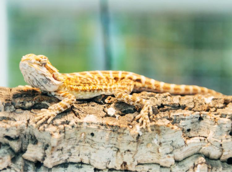 Exotic animal エキゾチックアニマル治療 専門サイト